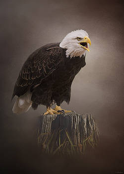 Begin Doing - Eagle Art by Jordan Blackstone