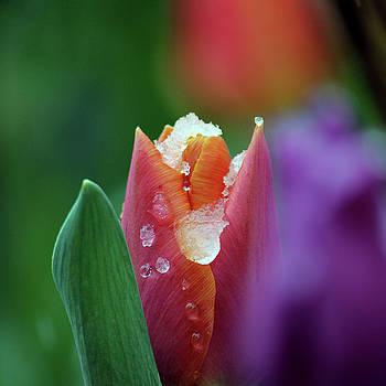Beginning of spring by Silke Brubaker