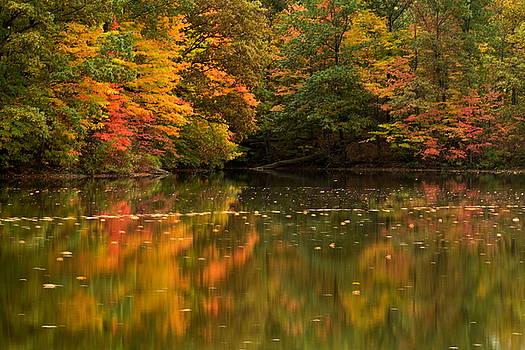 Beginnings of Autumn by Amanda Kiplinger