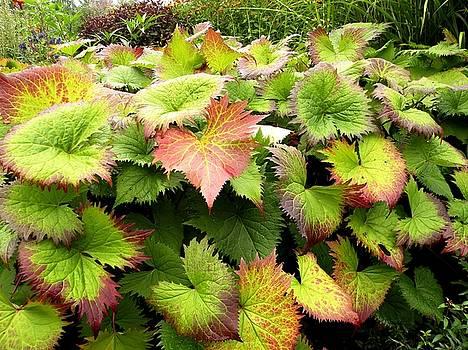 Begonia Leaves by Sandra Sengstock-Miller