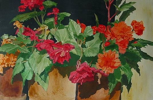 Begonias Flowers Colorful Original Painting by K Joann Russell