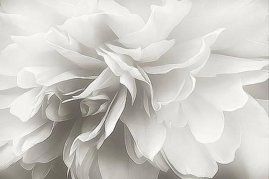 Behind the Veil by Darlene Kwiatkowski