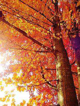 Behold the Beauty of Autumn by Lori Frisch