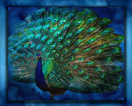 Being Yourself - Peacock Art by Jordan Blackstone