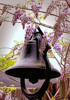 Bell and Wisteria by Bonnie Willis
