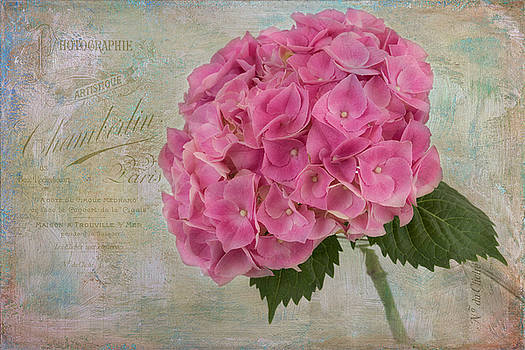 Belle Fleur by Kim Hojnacki