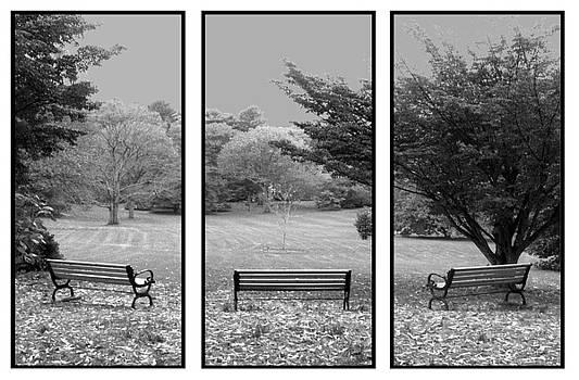 Bench View Triptic by Tom Romeo