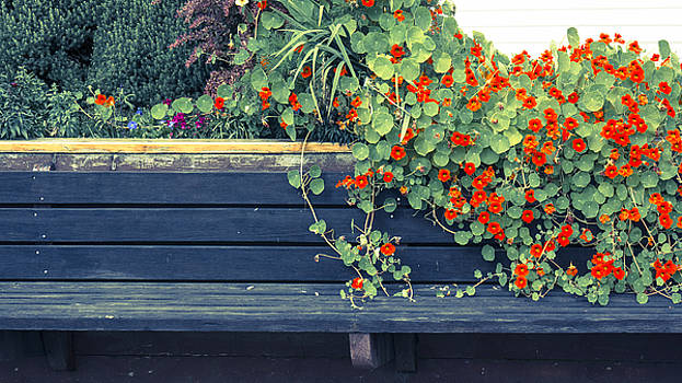 Bench with Flowers by Michele Cornelius