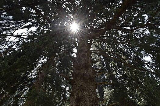 Beneath the tree by Sumit Mehndiratta