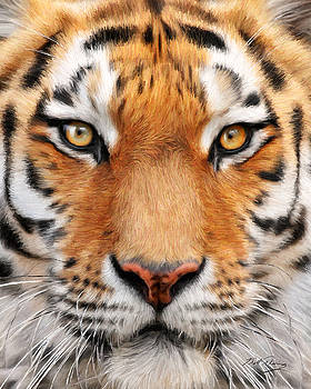 Bengal Tiger by Bill Fleming