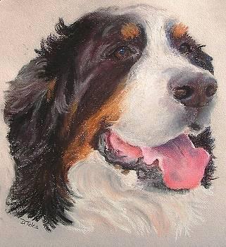 Bernese Mountain Dog by Donna Teleis