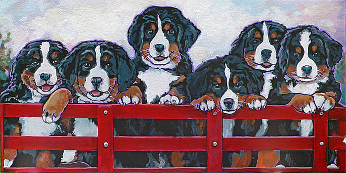 Bernese Mountain Dog Puppies by Nadi Spencer