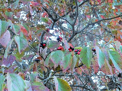 Berries by Kay Gilley