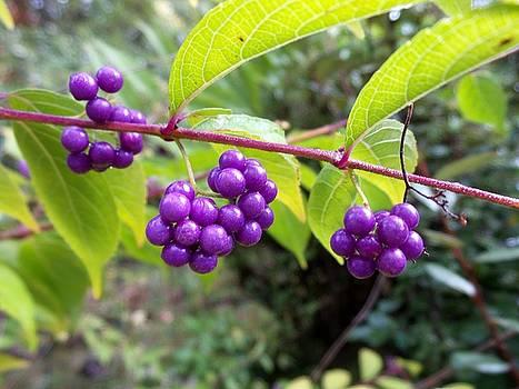 Berries by Rosie Brown