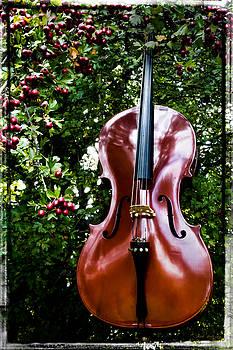 Mick Anderson - Berry Mellow Cello