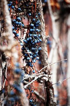 Berry Time by Sarah Hamlin