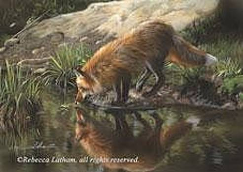 Beside Still Waters - Red Fox by Rebecca Latham
