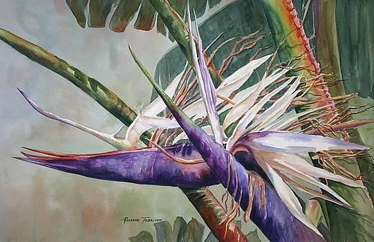 Betty's Bird - Bird of Paradise by Roxanne Tobaison