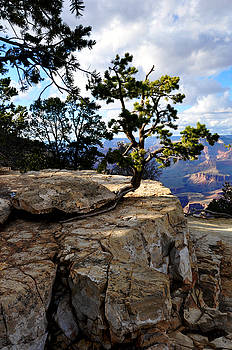 Between A Rock and A Hard Spot by Eric Liller