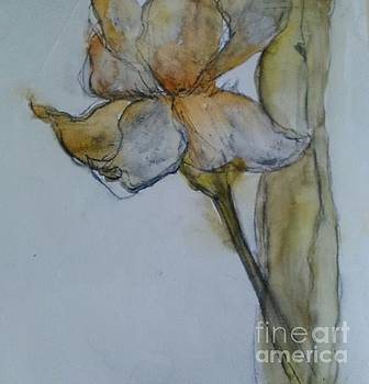 Big Bear Iris 2 by Sherry Harradence