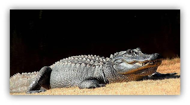 Rosanne Jordan - Big Daddy Gator