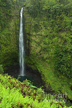 Big Island Waterfall - Hawaii by Charmian Vistaunet