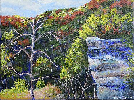 Big Rock at Falls Creek by Alexis Baranek
