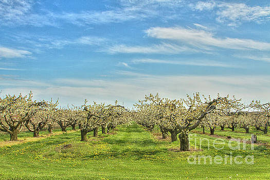 Big Sky Orchard by Marilyn Cornwell