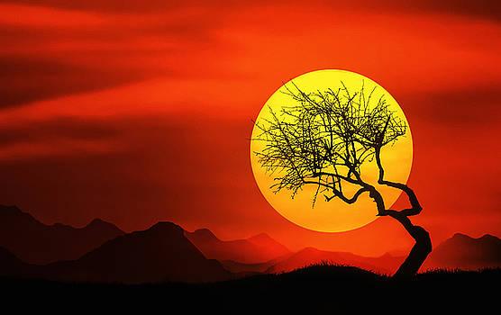 Big Sunset by Bess Hamiti
