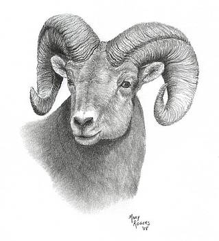 Bighorn Sheep by Mary Rogers