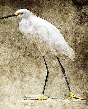 Biloxi Bay Bird by Gulf Island Photography and Images