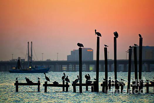 Biloxi Bay Sentinels by Joan McCool