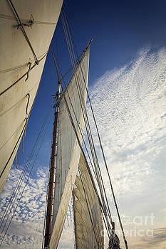 Biloxi Schooner Sailing by Joan McCool