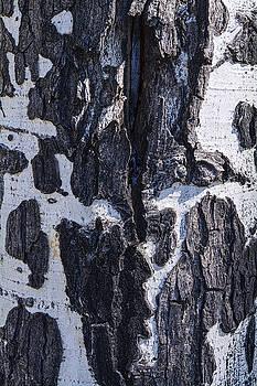 Saija  Lehtonen - Birch Bark