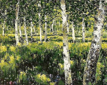 Birch Forest In The Sun by Maxim Grunin