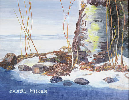 Birch Tree In WInter by Carol L Miller
