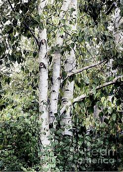 Birch Trees  by Elaine Manley