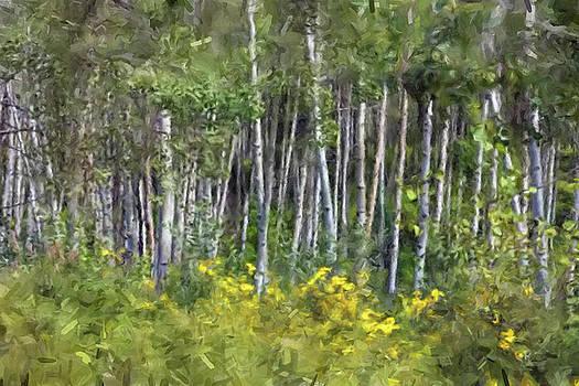 Birch Trees by Gary Grayson