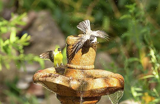 Bird 14 by Michel DesRoches