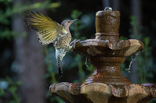 Bird 2 by Michel DesRoches