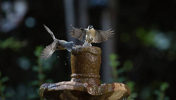 Bird 3 by Michel DesRoches
