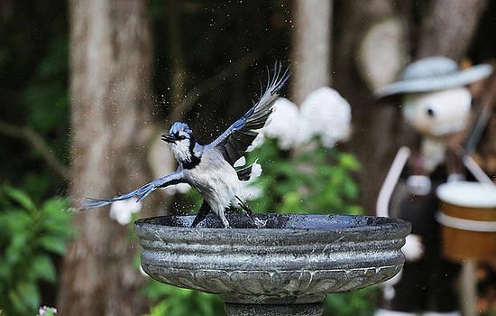 Bird 4 by Michel DesRoches