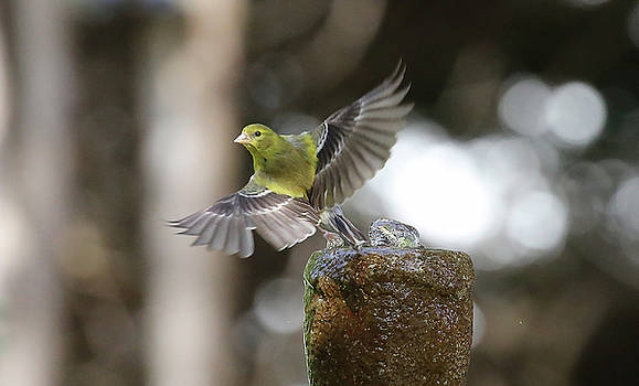 Bird 5 by Michel DesRoches