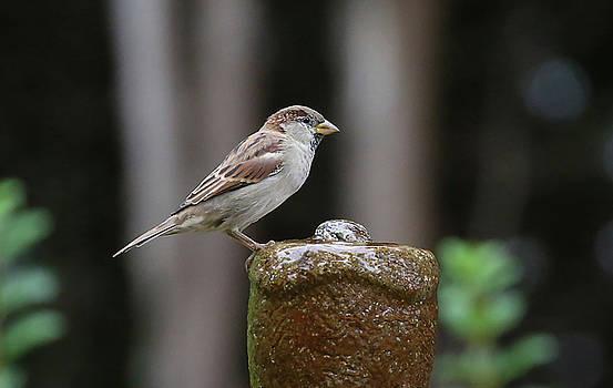 Bird 8 by Michel DesRoches
