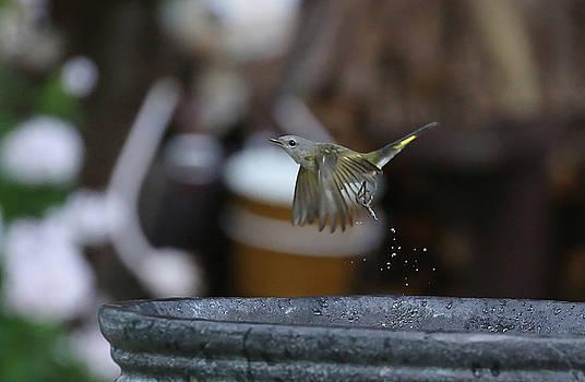 Bird 9 by Michel DesRoches