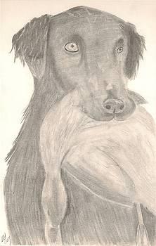 Bird Dog by Kristen Hurley