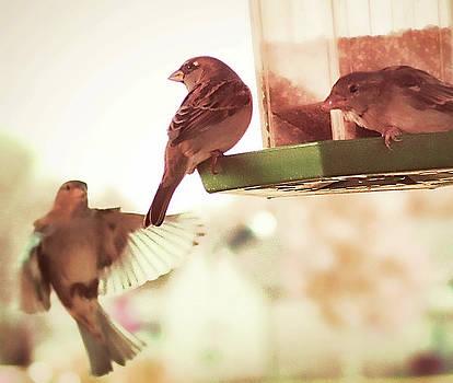 Bird Feeder Fellowship by Aliceann Carlton