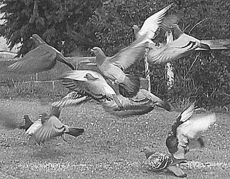 Bird Flurry by Suzy Piatt