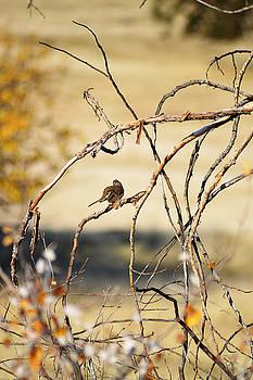 Bird in a Bush by Pamela Patch