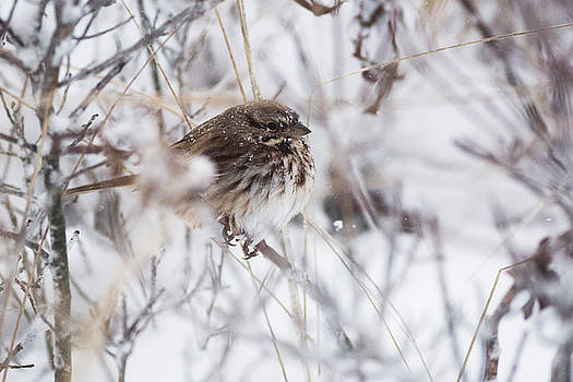 Bird In Snow by Ryan Moore